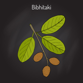 Bibhitaki
