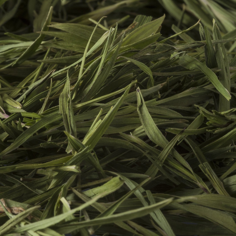 Bambusteeblätter