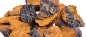 Chaga Pilz kaufen in Brocken