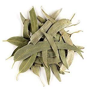 Eukalyptustee